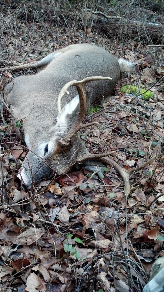 Josh Keebler downed this PA whitetail during rifle season.